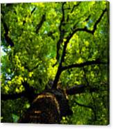 Forest Top Canvas Print