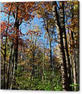 Forest Veteran Canvas Print