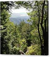 Forest View From Mt Tamalpais Canvas Print