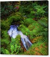 Forest  Water Stream. Benmore Botanic Garden Canvas Print