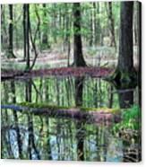 Forest Wetland Canvas Print