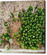 Forest With Green Trees From Above Canvas Print