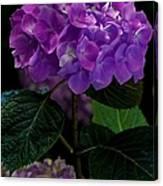 Forever Violet Canvas Print