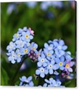 Forget Me Not 1 Canvas Print