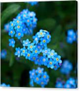 Forget -me-not 5 Canvas Print