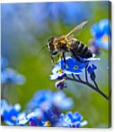 Forget Me Not Bee 2 Canvas Print