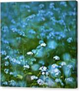 Forget-me-not Flower Patch Canvas Print
