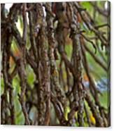 Form Color Texture Pattern Plants 15 Canvas Print