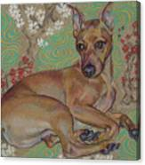 Mini-pinscher Canvas Print
