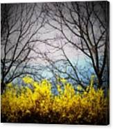 Forsythia By The Mountains Canvas Print