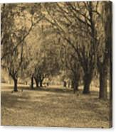 Fort Frederica Oaks Canvas Print