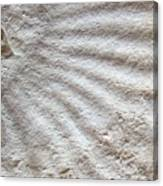 Fossil Four Canvas Print