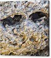Fossil Rock Abstract - Eyes Canvas Print