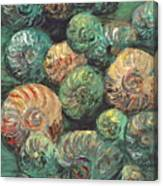 Fossil Shells Canvas Print