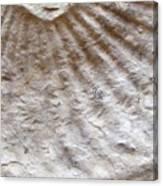 Fossil Three Canvas Print