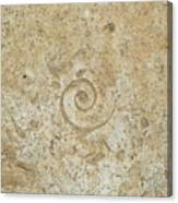 Fossils In The Cave Canvas Print