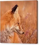 Found Fox Canvas Print
