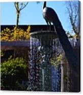 Fountain And Peacock Canvas Print