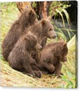 Four Bear Cubs Looking In Same Direction Canvas Print