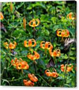 Four Butterflies On Turks Cap Lilies Canvas Print