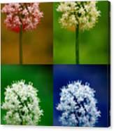 Four Colorful Onion Flower Power Canvas Print