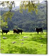 Four Cows At Nojoqui Ranch Canvas Print