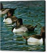 Four Ducks In A Row Canvas Print