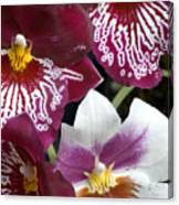 Four Exotic Orchid Blossoms Canvas Print