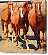 Four Horses Running Canvas Print