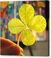 Four Leaf Clover In Studio 2 Canvas Print