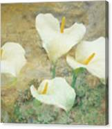 Four Lilies Canvas Print
