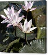 Four Lilies In The Sunlight Canvas Print