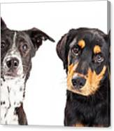 Four Mixed Breed Dogs Closeup Canvas Print