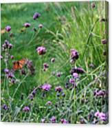 Four Monarch Butterflies Canvas Print