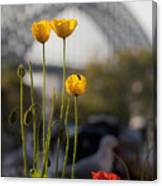 Four Poppies With Harbour Bridge Backdrop Canvas Print