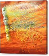 Four Seasons Winds Canvas Print
