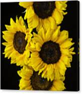 Four Sunny Sunflowers Canvas Print
