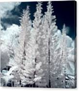 Four Tropical Pines Infrared Canvas Print