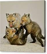 Fox Cubs At Play II Canvas Print