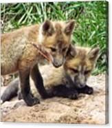Fox Feather Play Canvas Print
