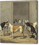 Fox Hounds Canvas Print