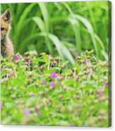 Fox In The Garden Canvas Print