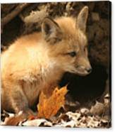 Fox Kit At Entrance To Den Canvas Print