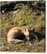 Fox Kit Canvas Print