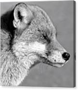 Fox - Mono Canvas Print