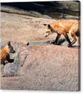 Red Fox Playtime Canvas Print
