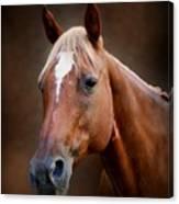 Fox - Quarter Horse Canvas Print
