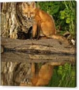 Fox Reflection Canvas Print