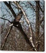 Fox River Eagles - 20 Canvas Print