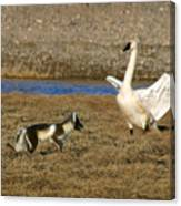 Fox Vs Swan Canvas Print